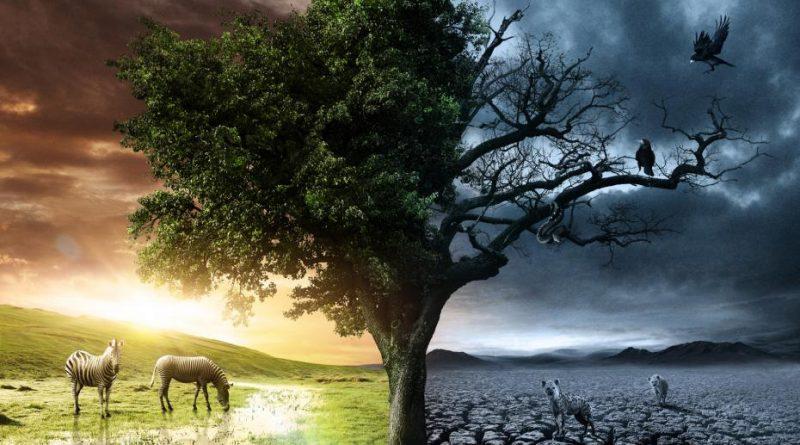 Vida y muerte. El tiempo lineal